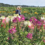Cleome Pickers