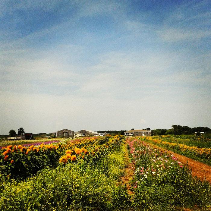 Flower Fields nantucket
