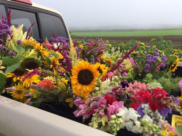 Cut Flower Tour Full Truck