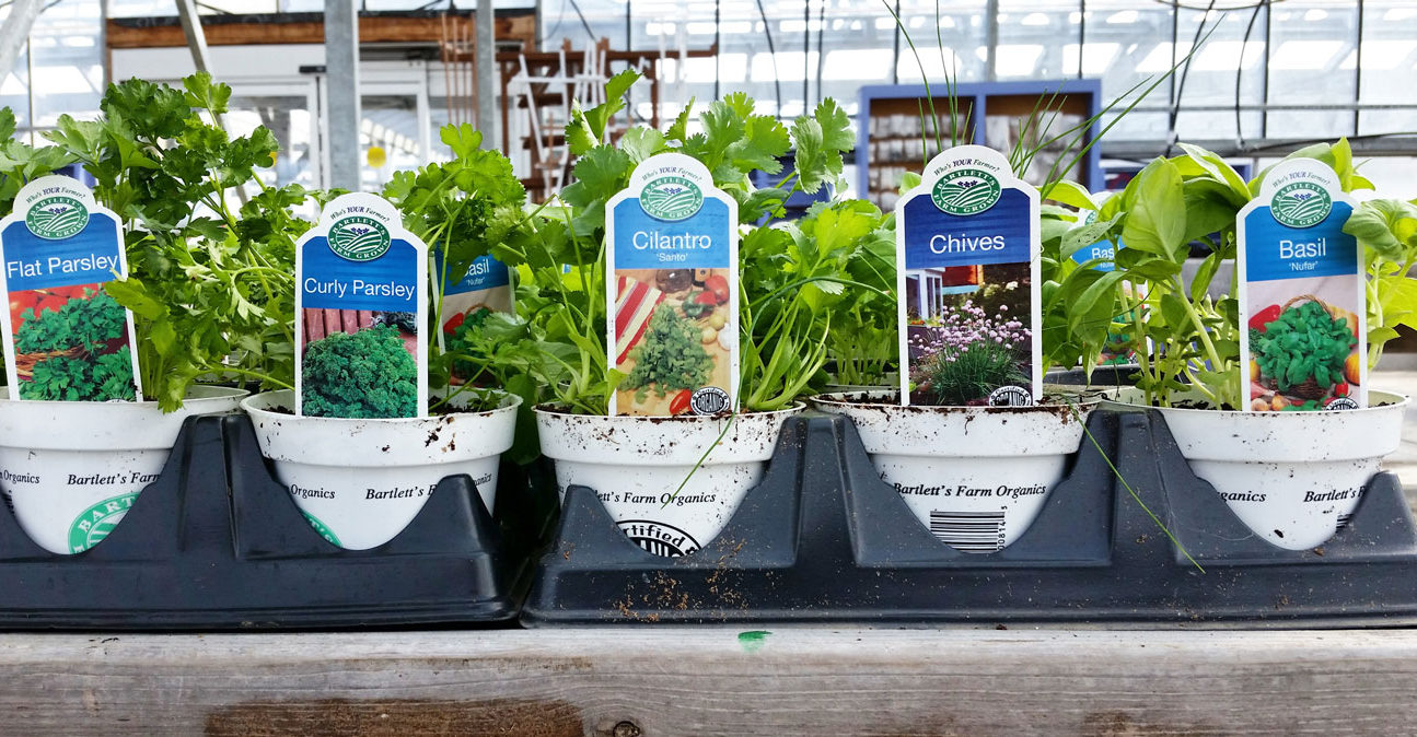 Herbs for Your Garden | Bartlett's Farm, Nantucket, MA