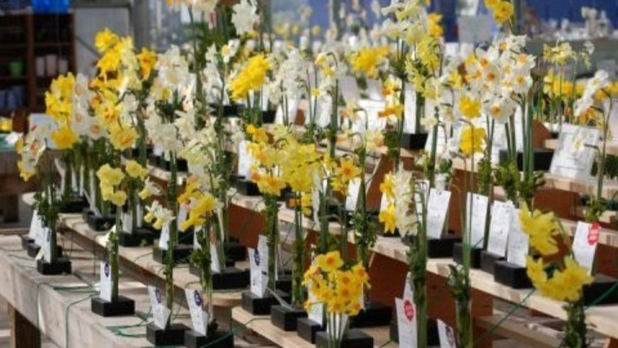 45th Annual Community Daffodil Flower Show