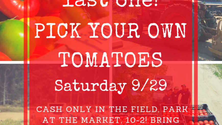 Pick Your Own Tomatoes
