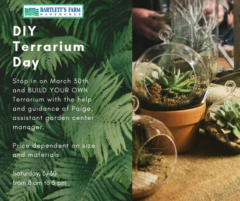 Copy of terrarium day 30th