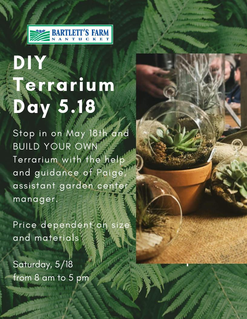 diy terrarium 5.18