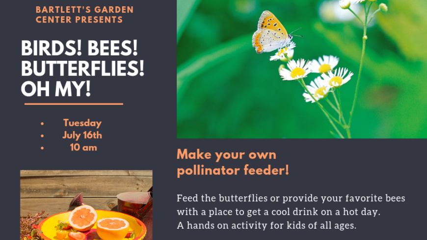 Children's Summer Workshop; BIRDS! BEES! & BUTTERFLIES! OH MY!