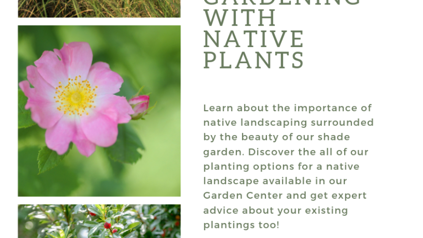 Summer Farm Talk Series; Gardening with Native Plants